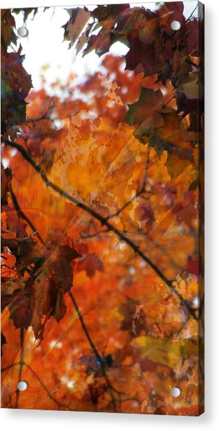 Painted Branches Abstract 4 Acrylic Print