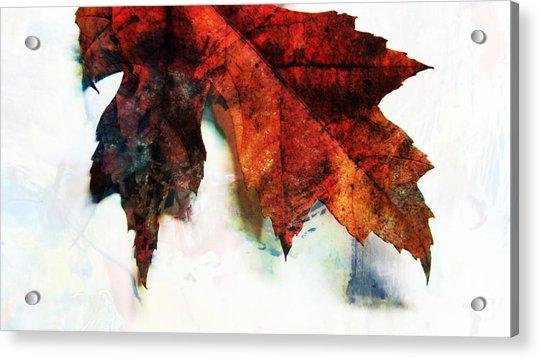 Painted Leaf Series 3 Acrylic Print
