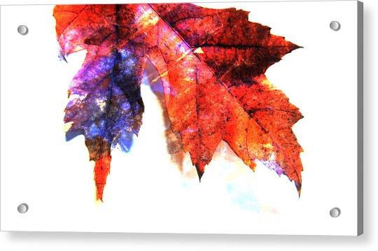 Painted Leaf Series 4 Acrylic Print