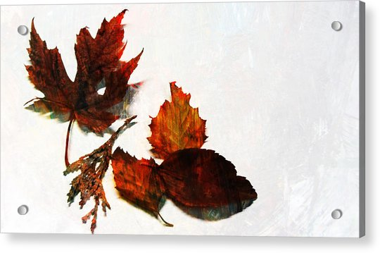 Painted Leaf Series 5 Acrylic Print