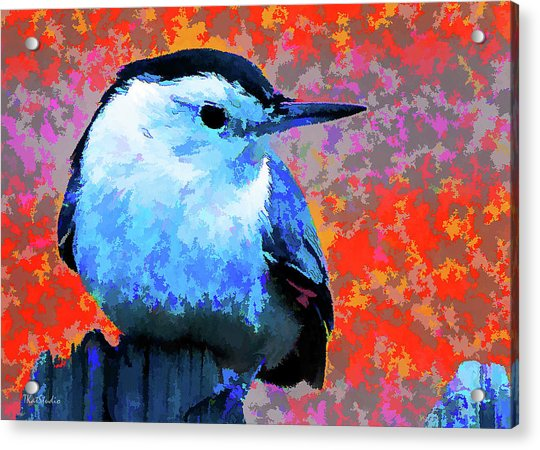 Painted White Breasted Nuthatch Acrylic Print