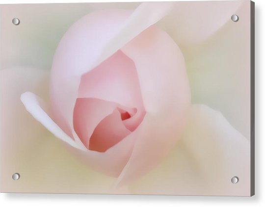Palest Of Pink Acrylic Print