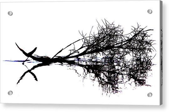 Palm Branch At The Beach Acrylic Print