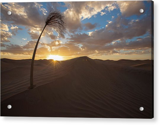 Palm On Dune Acrylic Print