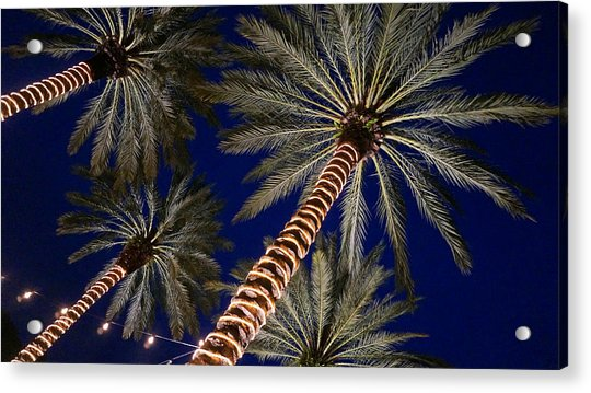 Palm Trees Wrapped In Lights Acrylic Print