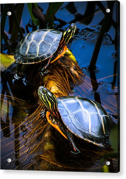 Passing The Day With A Friend Acrylic Print