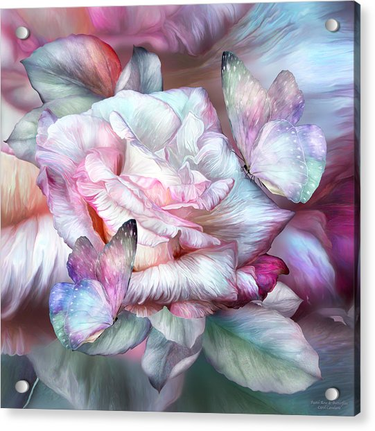 Pastel Rose And Butterflies Acrylic Print
