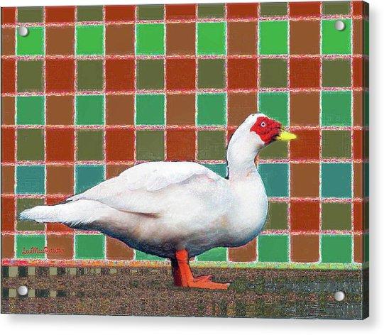 Pato Art 4 Acrylic Print