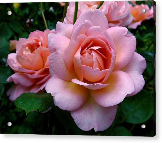 Acrylic Print featuring the photograph Peachy Pink by Rona Black
