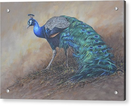 Acrylic Print featuring the painting Peacock by Alan M Hunt