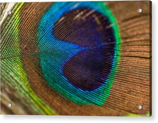 Peacock Feather Macro Detail Acrylic Print