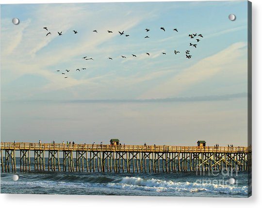 Pelicans At Flagler Beach Acrylic Print