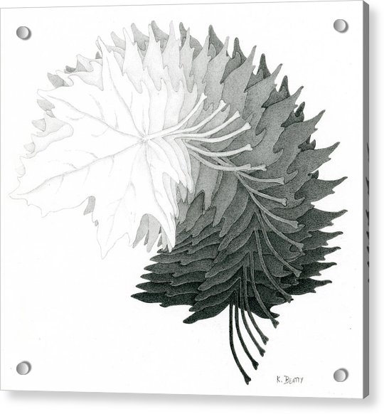 Pencil Drawing Of Maple Leaves Acrylic Print