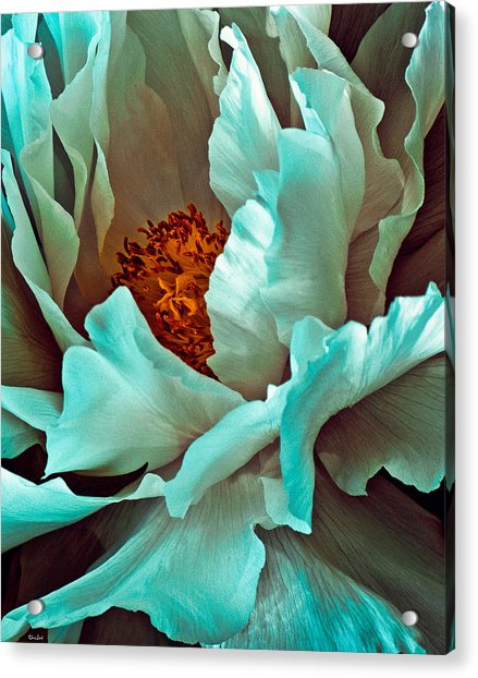 Acrylic Print featuring the photograph Peony Flower by Chris Lord