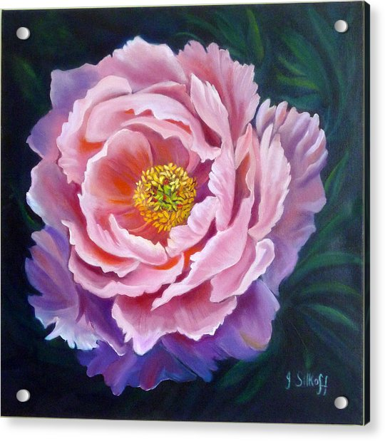Peony Acrylic Print by Janet Silkoff