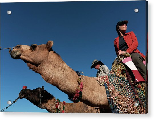 People On The Camel, Pushkar Acrylic Print