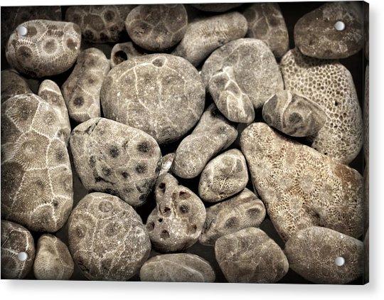 Petoskey Stones Vl Acrylic Print