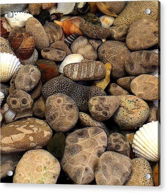 Petoskey Stones With Shells L Acrylic Print