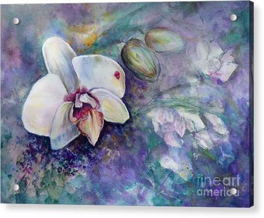 Phalaenopsis Orchid With Hyacinth Background Acrylic Print