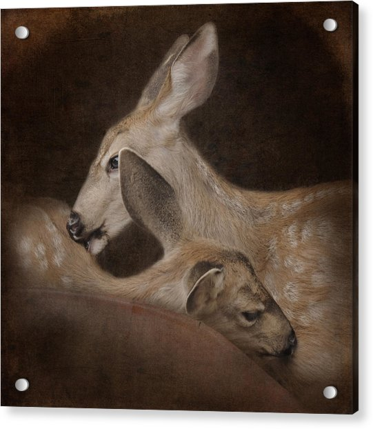 Acrylic Print featuring the photograph Phileo by Sally Banfill