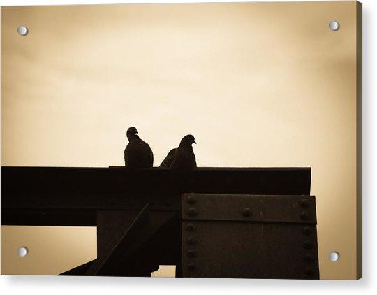 Pigeon And Steel Acrylic Print