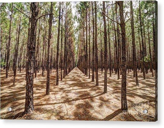 Pine Plantation Wide Color Acrylic Print