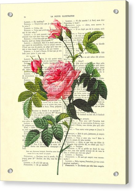 Pink Roses, Valentines Gift Acrylic Print
