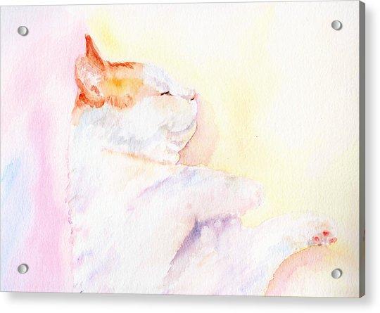 Playful Cat Iv Acrylic Print