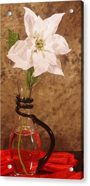 Poinsettia In Pitcher  Acrylic Print