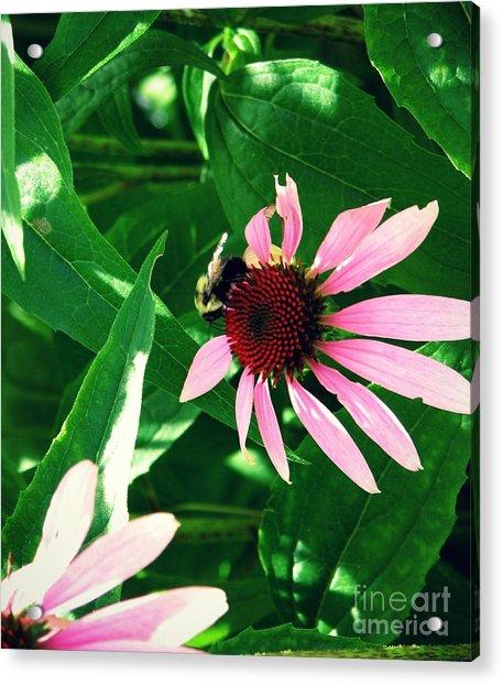 Pollinize Acrylic Print