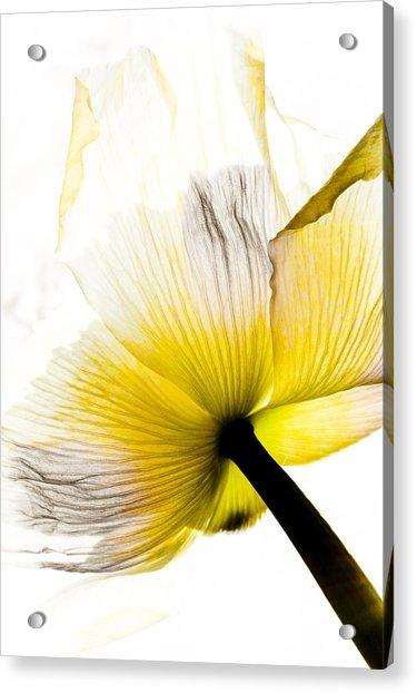Poppy Flower Art Acrylic Print