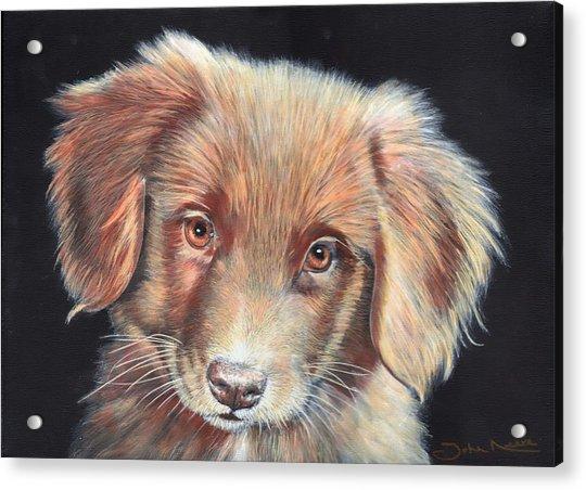 Portrait Of Toby Acrylic Print