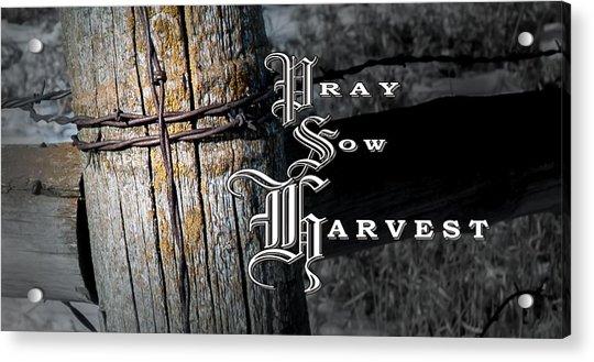 Pray Sow Harvest Acrylic Print