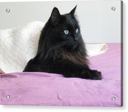 Princessy Cat Acrylic Print