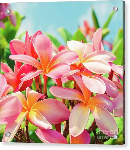 Pua Melia Ke Aloha Maui Acrylic Print