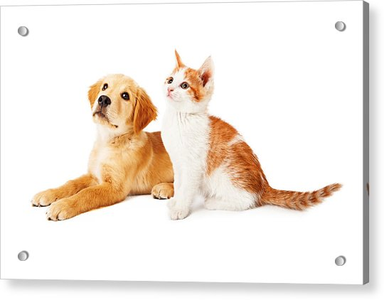 Puppy And Kitten Looking To Side Acrylic Print