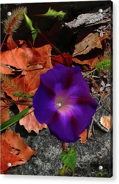 Purple Flower Autumn Leaves Acrylic Print