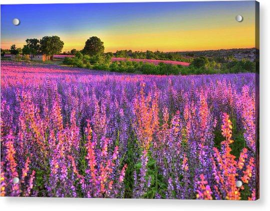 Purple Love Acrylic Print