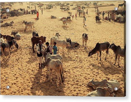 Pushkar Mela Ground, Pushkar, India Acrylic Print