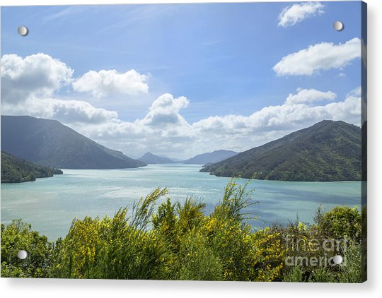 Queen Charlotte Sound, New Zealand Acrylic Print by Julia Hiebaum