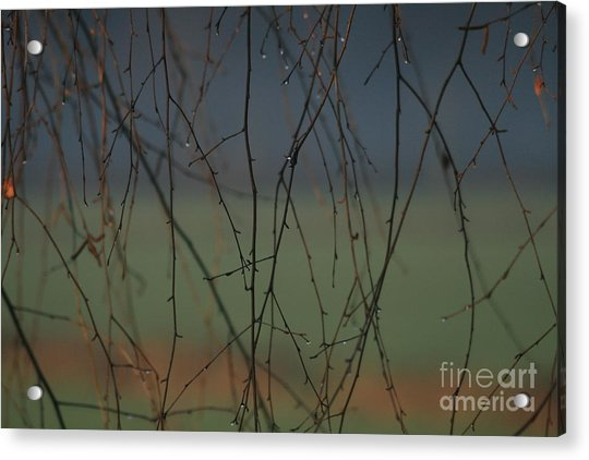 Rain Acrylic Print by Marta Grabska
