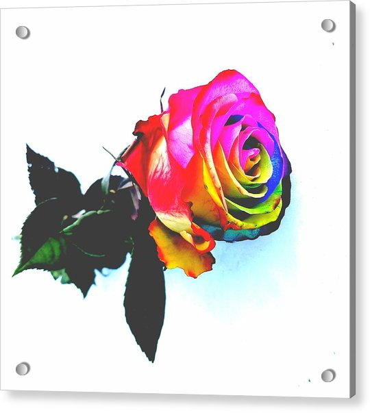 Rainbow Rose 2 Acrylic Print