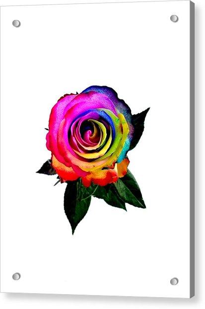 Rainbow Rose  Acrylic Print