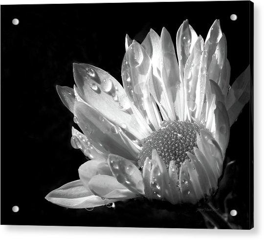 Raindrops On Daisy Black And White Acrylic Print