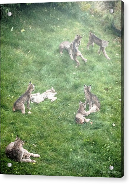 Acrylic Print featuring the photograph Play Together Prey Together by Tim Newton