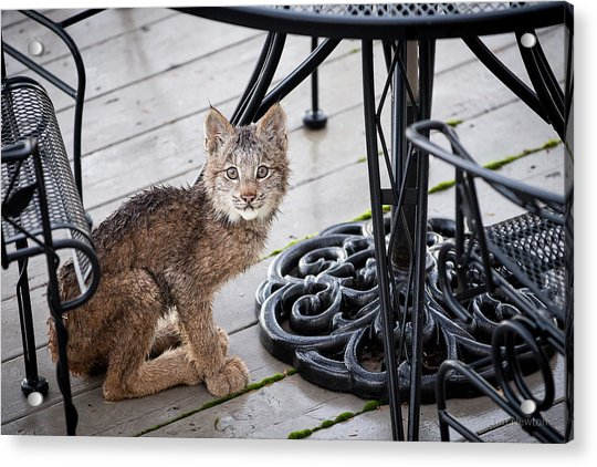 Acrylic Print featuring the photograph Are You Looking At Me by Tim Newton