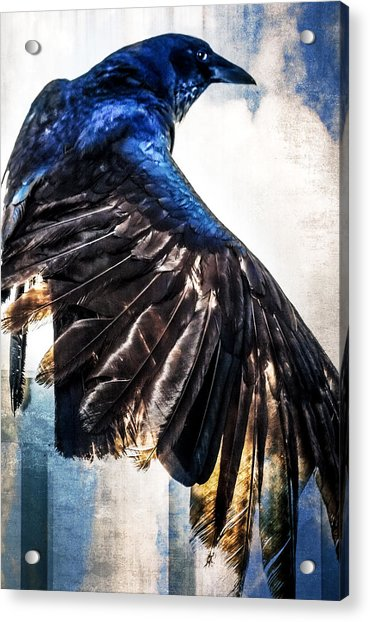 Acrylic Print featuring the photograph Raven Attitude by Carolyn Marshall