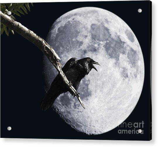 Raven Barking At The Moon Acrylic Print