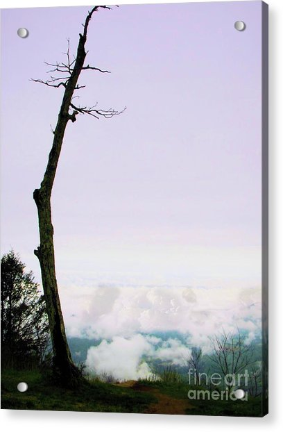 Reaching In The Shenandoah Acrylic Print