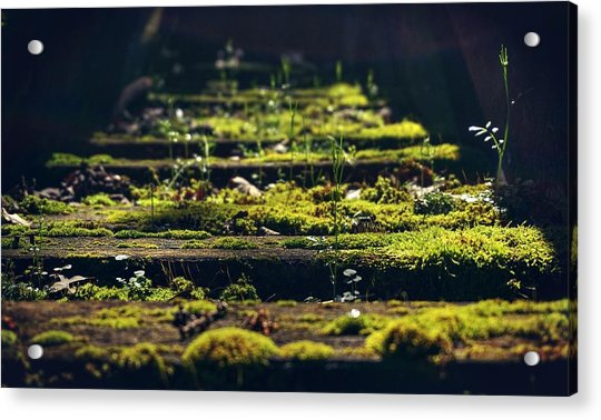 Reclaimed By Nature Acrylic Print